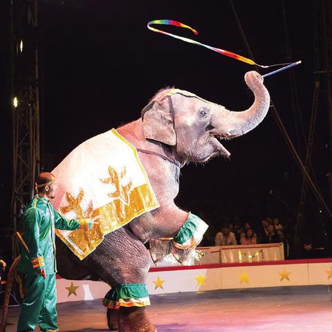 170331_circus07.jpg
