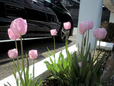 http://www.h-cars.co.jp/showroom/topics/assets_c/2014/04/140423_newstaff01-thumb-400xauto-294.jpg