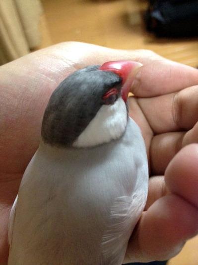 141015_bird02.jpg