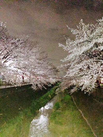 150420_bloom02.jpg