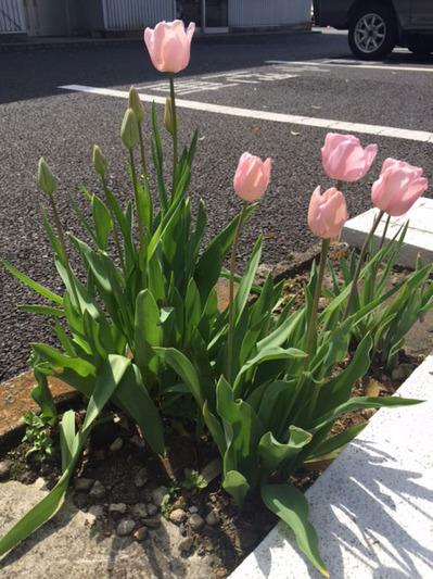 150420_bloom03.jpg