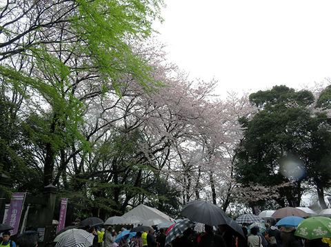 170410_matsuri02.jpg