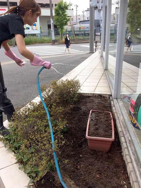 170531_himawari01.jpg