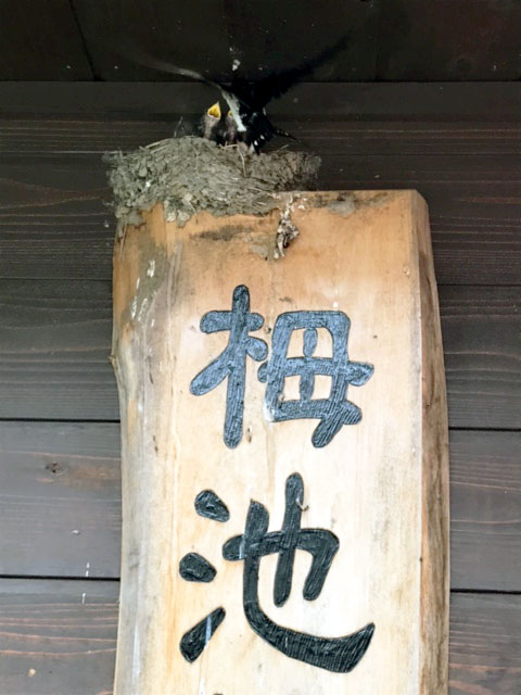 170821_nagano03.jpg
