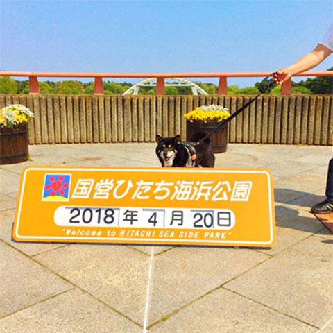 180507_hitachi02.jpg