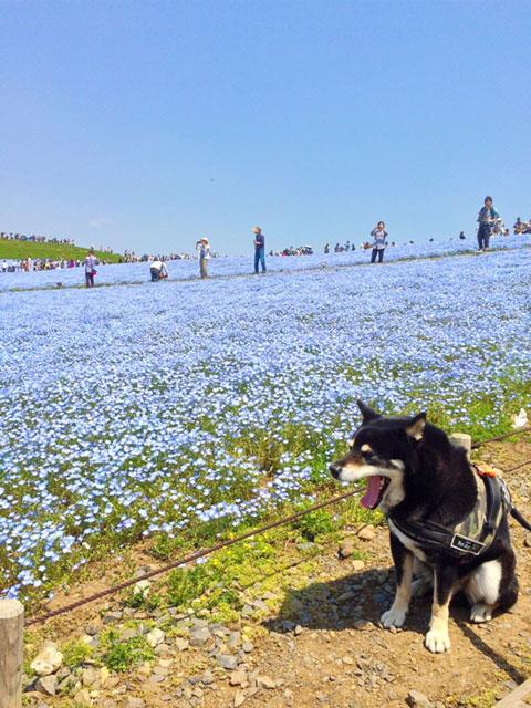 180507_hitachi03.jpg