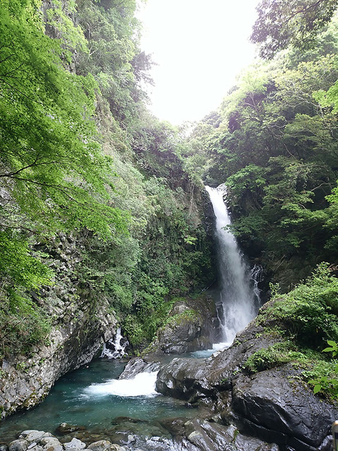 180507_kawazu03.jpg