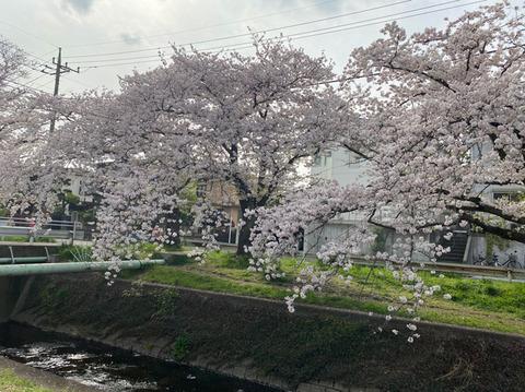 210408_tsuzuki02.jpg