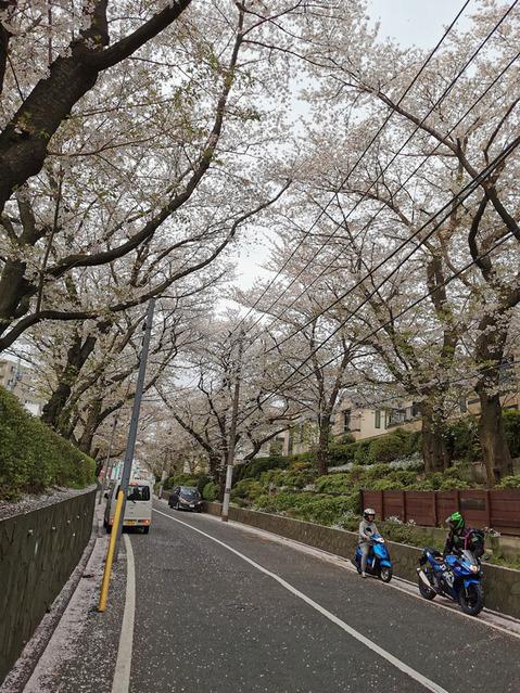 210426_tsurumi05.jpg