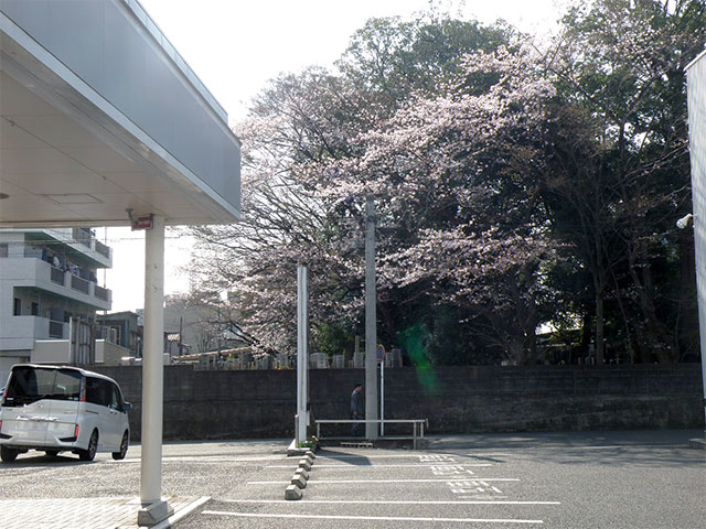 http://www.h-cars.co.jp/showroom/topics/images/160408_sakura01.jpg