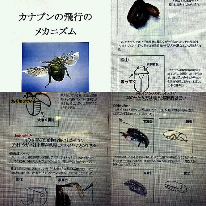 「カナブンの飛行のメカニズム」