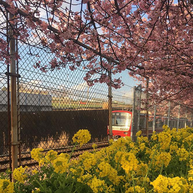 三浦海岸で春を先取り。