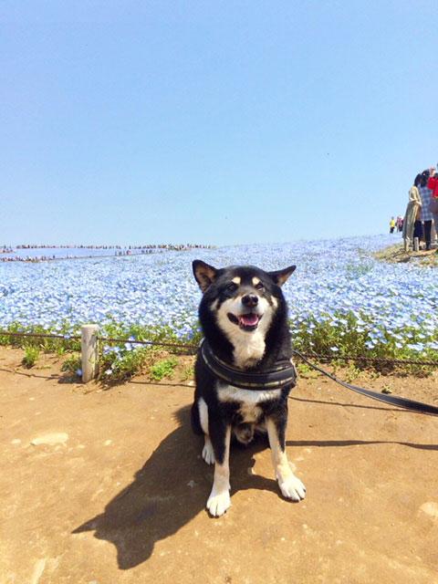 愛犬といっしょに国営ひたち海浜公園へ!