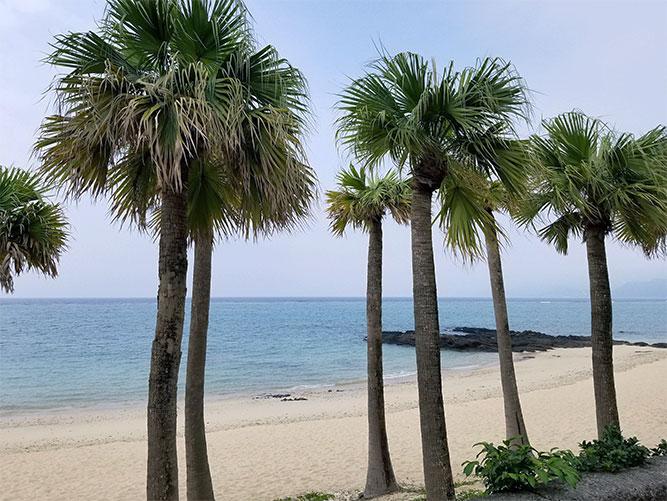 奄美大島1泊2日弾丸旅行!