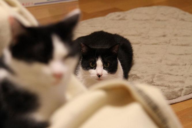 そろそろ実行してくださいね「猫バンバン」!