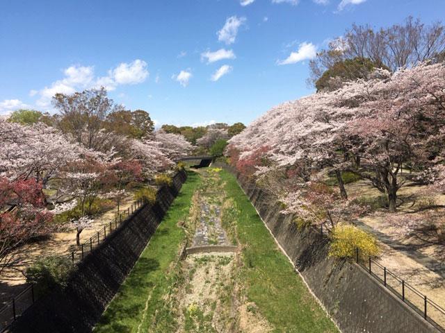春の昭和記念公園。