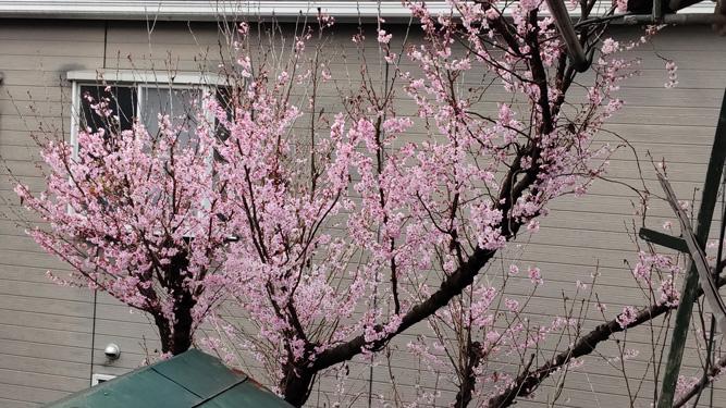 春はもうすぐ。