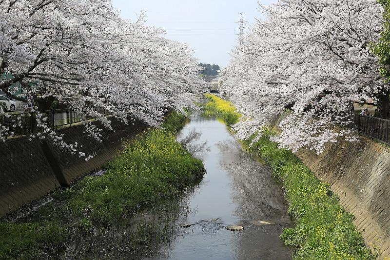 桜の季節と新企画☆